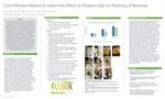 Cost-Effective Method to Determine Effect of Ethylene Gas on Ripening of Bananas