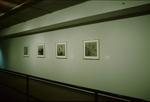Faculty Exhibit 019