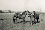 Marjorie Stinson standing with three horses