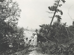 Scipio at Lambert Island