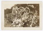 Flower Arrangement for Major Raoul Lufbery's Grave
