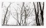 Bird nests in branches