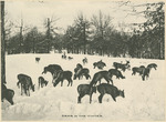 Deer in the Winter at the National Military Home of Dayton by Keyes Souvenir Card Company